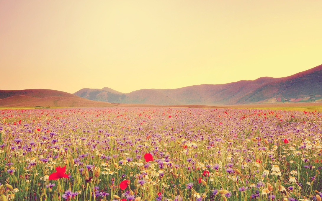 wildflower-wallpaper-tumblr-wldxdebfq